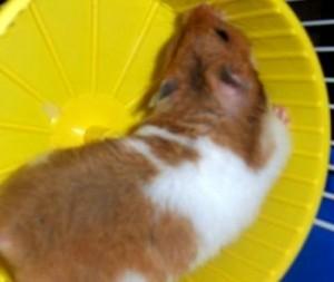 Job Make You Feel Like a Hamster on a Wheel?